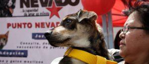 CONATEL y Misión Nevado ofrecen jornada gratuita de atención veterinaria
